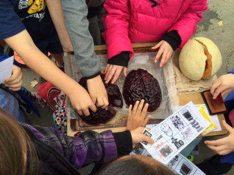 Judah students examine Jell-O brains and melons to learn about bike helmets